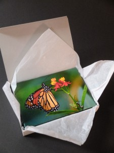 tissue paper folded back from butterfly canvas