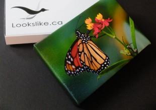 "4x6 Canvas ""Caterpillar"" with Lookslike-Box"