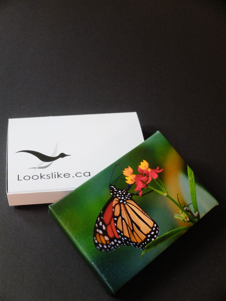 "4x6 Canvas ""Caterpillar"" with Lookslike-Box"